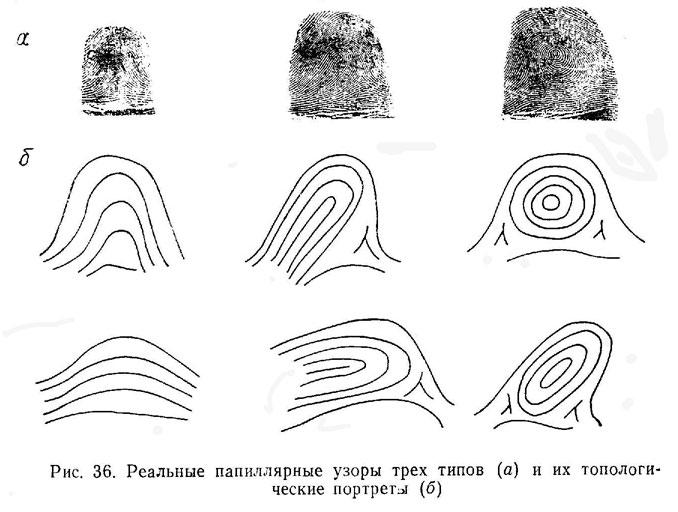 Типы и виды папиллярных узоров. Читальный зал на сайте